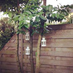 Lantaarntjes van Ikea in ons boompje.