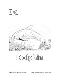 Dolphin Printables, Word Search, Vocabulary, Crossword and