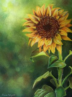 'Sunflower' - for Daph