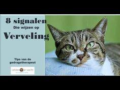 Deze signalen wijzen erop dat je kat zich verveelt
