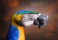 """Uma ténica muito interessante e que através das mãos a #pintura de Guido Daniele da vida a lindos animais. """"O papagaio"""" #perfect #inspiracao #InspiracaoeTudo"""