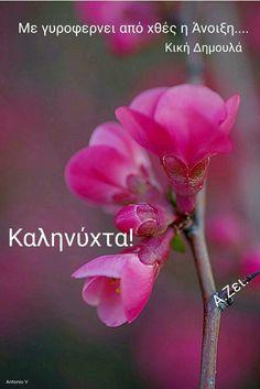 Good Night, Good Morning, Plants, Nighty Night, Buen Dia, Bonjour, Plant, Good Night Wishes, Good Morning Wishes