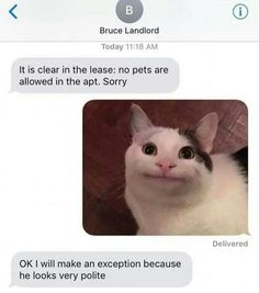 This is a big list of memes. I mean, a giant 82 image collection of funny memes from all over the internet. Want to see the best memes from We have those too! Funny Animal Memes, Funny Animal Pictures, Cute Funny Animals, Cat Memes, Cute Cats, Memes Humor, Animal Quotes, Funny Humor, Funny Quotes