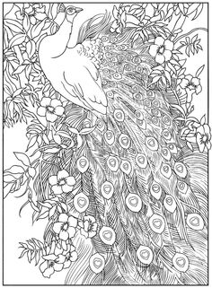 peacock feather coloring pages coloring adult detailed advanced printable line art black and white - Peacock Coloring Pages For Adults