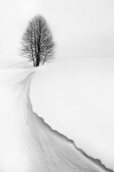 Photography images - lonesome tree beyond the snowy rise