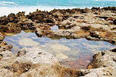 Tide Pools by Turtle Bay SEIS, via Flickr Turtle Bay Resort, North Shore Oahu, Tide Pools, Grand Canyon, Nature, Travel, Naturaleza, Viajes, Destinations