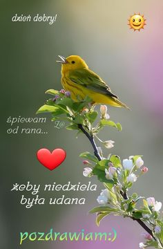Good Morning, Funny Quotes, Bird, Night, Pictures, Animals, Crafts, Bom Dia, Funny Phrases