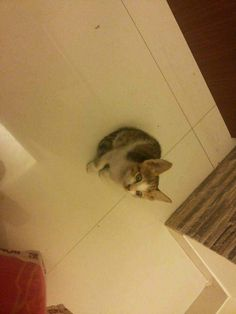 Missing my kitty <3