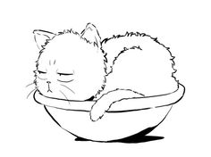 sleepy cat in a soup bowl, yes, please!!!