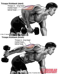 DUMBBELL-KICKBACK-INS1 #Fitness #conditioning #exercise Re-pinned by www.avacationrental4me.com