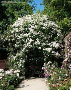 At Alnwick Garden