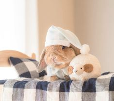 Meet PuiPui The Adorable And Stylish Bunny - World's largest collection of cat memes and other animals Cute Baby Bunnies, Funny Bunnies, Pretty Animals, Cute Little Animals, Art Beagle, Beagle Dog, Cute Bunny Pictures, Bunny Care, Fluffy Bunny