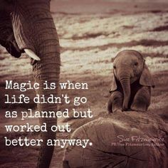 Magic is when life didn't go as planned but worked out better anyway. Can you relate? I sure can and I& just live on and on no matter what. Great Quotes, Me Quotes, Motivational Quotes, Inspirational Quotes, Crush Quotes, Elephant Quotes, Elephant Love, Quotes About Elephants, Meaningful Quotes