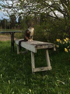 Kissa, penkki ja pikatie