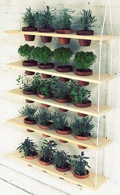 Jardín vertical de plantas aromáticas