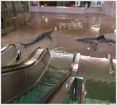 Kuwait center of science gone wild. (Collapse of a shark tank.)
