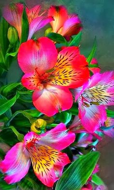"""Devotion"" Alstroemeria or Pruvian Lily is a wonderful flower . It is a spotted perennial lilylike flower. Available at Skyline"
