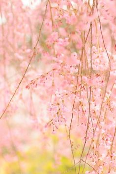 Light PINK and green.... Nature gives us the most INCREDIBLE color pallets....-Ang