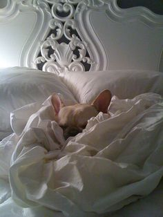The life every Frenchie deserves...