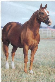 Peppy San Badger. Great-grandfather of our colt and just an amazing horse.