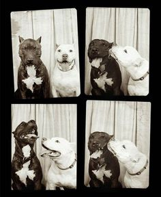 dogs in photobooth