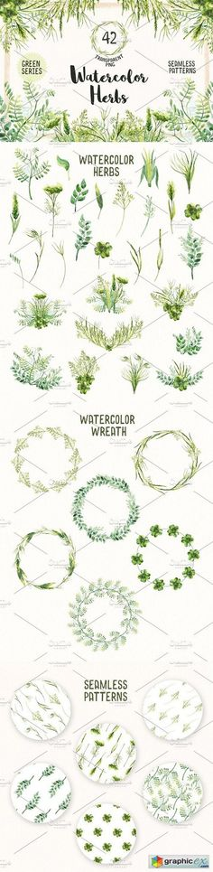 Watercolor Herbs Vol.2  stock images