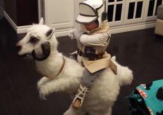 This Toddler's Jedi Riding a Tauntaun Costume Just Won Halloween.