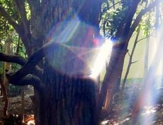 The Archangel of Nature Unicorn Pictures, Creepy Pictures, Nature Is Speaking, Diana Cooper, New Earth, Daddy, Natural Energy, Human Condition, Lens Flare