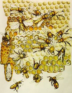 The Miracle Of The Honeybee, Harun Yahya