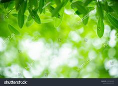 Closeup Nature View Green Leaf On ภาพสต็อก (แก้ไขตอนนี้) 1446320429 Nature Green, Green Leaf Background, Nature View, Green Leaves, Close Up, Stock Photos