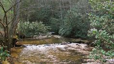 Rock Creek in Fannin County GA. Frank Gross campground. Great place to camp and fish.