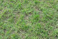 Homemade Weed Killer That Does Not Kill Grass