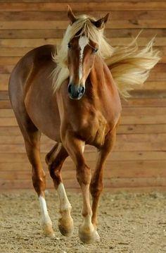 Most Beautiful Animals, Beautiful Horses, Beautiful Creatures, Beautiful Beach, Farm Animals, Animals And Pets, Cute Animals, Nature Animals, Horse Photos