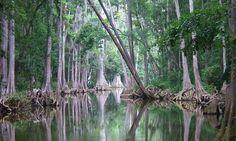 Dora Canal, Tavares, FL