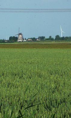 Detail uitzicht vanaf projectlocatie. #molen #akker #groen