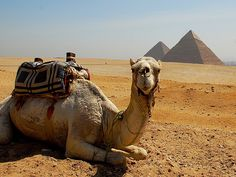 Egypt http://www.travelprofessionals.co.uk/holiday-list/showall|Egypt/showall/