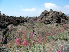 "Etna - lava ""aa"" and pahoehoe, and plant Valeriana rossa (Centranthus ruber)"