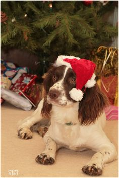 Merry Christmas from Digby   trulymadlykids.co.uk