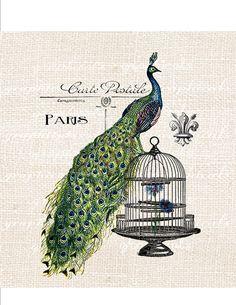 Peacock Birdcage Paris ephemera fleur de lis Digital download image Iron on fabric transfer burlap paper pillows cards No. 598. $1.00, via Etsy.