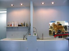 Grooming salons on pinterest dog grooming dog wash and for A bath and a biscuit grooming salon