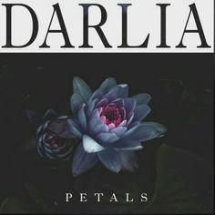 petals album art