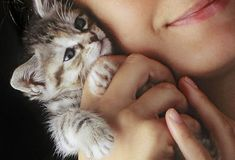 Kitten Care: From Adoption to Cat-Proofing your Home and General Kitty Care –WebMD Slideshow