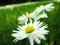 the disease of dancing flowers by darkdex52