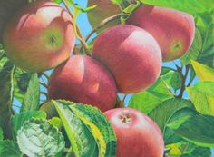 Healthy Choice, Glenda Pennock, Colored Pencil, http://coloredpencilmag.com/wp-content/uploads/2013/09/Glinda-Pennock_Healthy-Choice_s.jpg