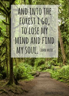 is My Sanctuary: Quotes to Inspire & Heal a forest with the quote and into the forest I go, to lose my mind and find my soul by John Muir.a forest with the quote and into the forest I go, to lose my mind and find my soul by John Muir. Frases De John Muir, John Muir Quotes, Soul Quotes, Nature Quotes, Life Quotes, Quotes About Nature, Nature Nature, Wild Nature, Art Prints Quotes
