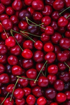 Close up of pile of ripe cherries with stalks. Large collection of fresh red cherries.