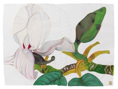 Sarah Graham – New Drawings Macro Flower, Flower Art, Sarah Graham Artist, Artist Sketchbook, Watercolor Flowers, Watercolour, Botanical Prints, New Art, Painting & Drawing