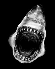 Robert Longo  Untitled (Shark 4), 2008