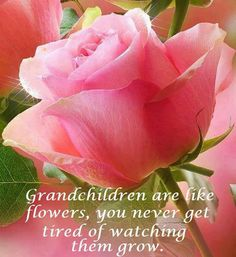 I love each one of my grandchildren (Nese, Alfonso, Zamara and Xavier) and now I am a proud great grandmother (Alyala) I am still not sure what I want her to call me. Almost stuck on G-G mother. Give me suggestions LOL Beautiful Roses, Pretty In Pink, Beautiful Flowers, Pretty Pics, Beautiful Things, Grandmother Quotes, Grandma And Grandpa, Quotes About Grandchildren, Grandmothers Love