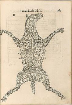 Anatomia del Cavallo. Infirmita del Cavallo
